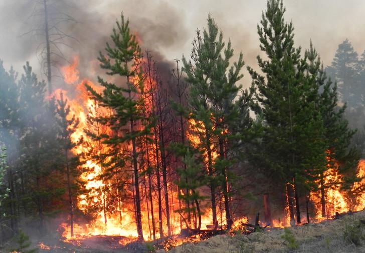 Лесные пожары  важность проблемы и методы борьбы с ней