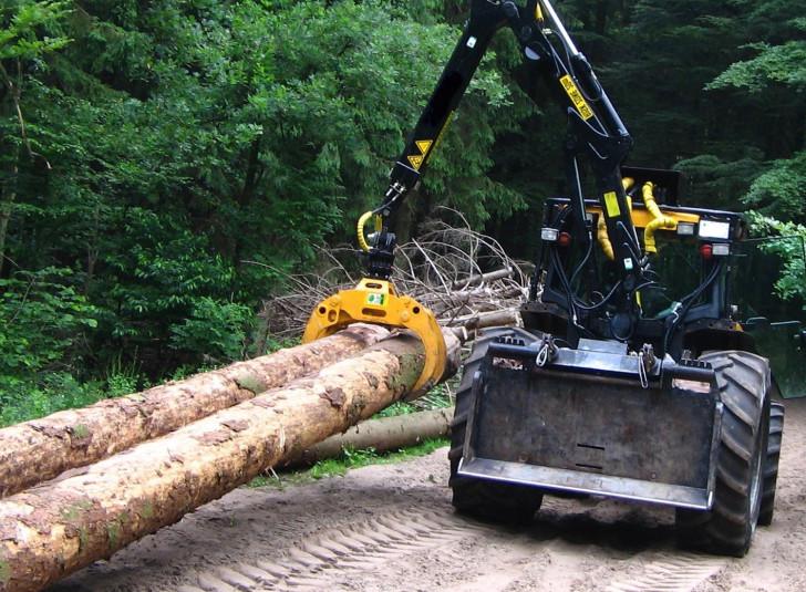 Бизнес по вырубке леса