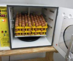 Инкубаторы для разведения индюков