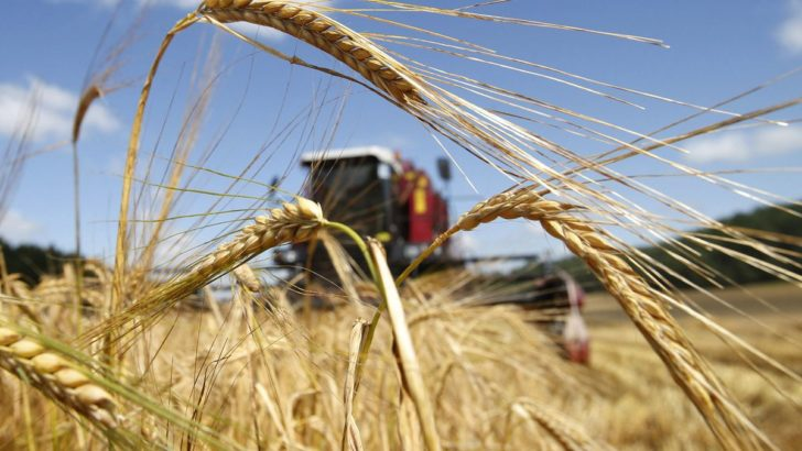 Под узбекским агротехническим брендом