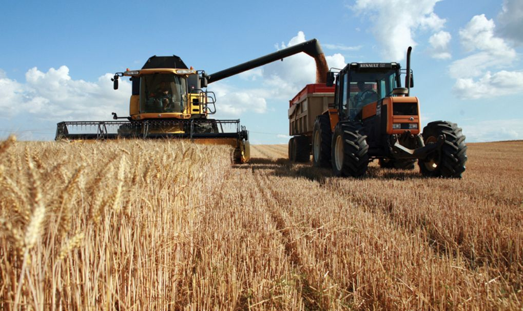 Изменение сельскохозяйственных волн позволит противостоять экстремальным температурам