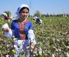 Белое золото Туркменистана Развитие  хлопководства в Туркменистане