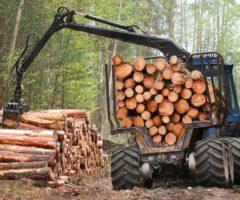 Частное предпринимательство в лесопромышленности Казахстана